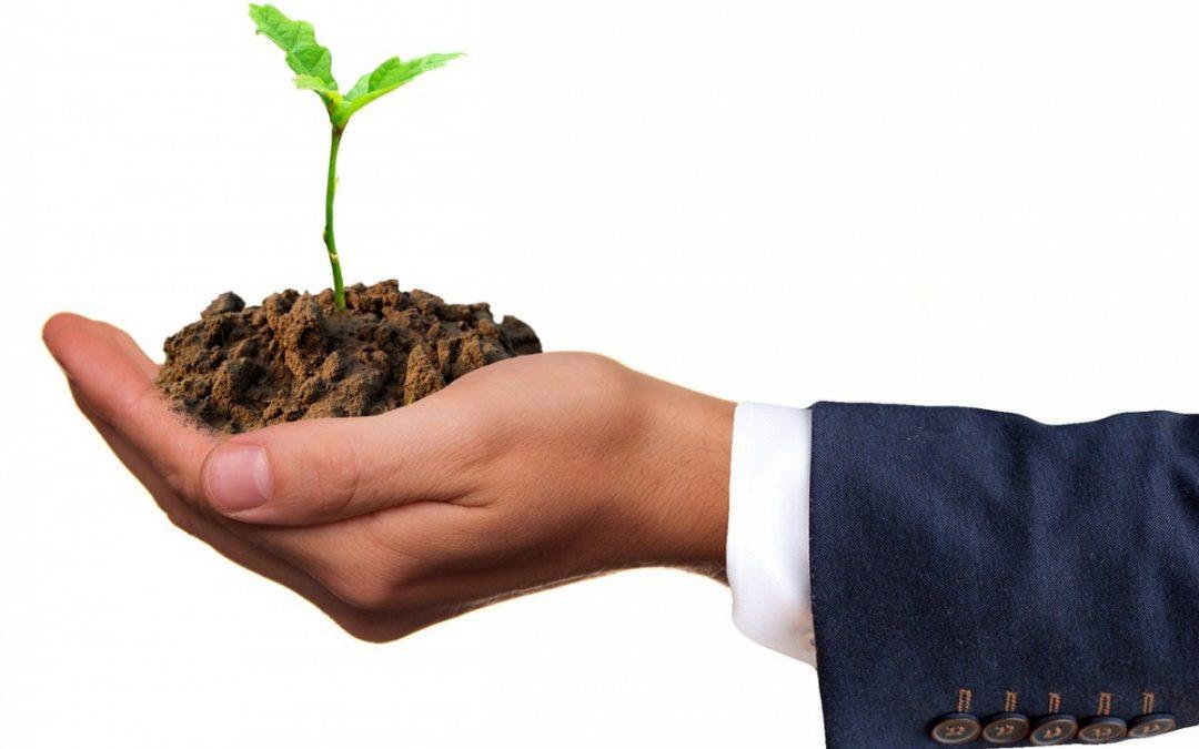 Unsere Spenden für Klimaneutralität: Schutzprojekte & Spendensummen im Überblick